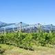 γραμμικές καλλιέργειες δέντρων
