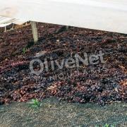 Natural drying net for Raisin