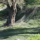 Δίχτυα Μόνιμης Στρώσης δέντρων